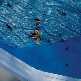 Copertura isotermica Ø 345 cm per piscina