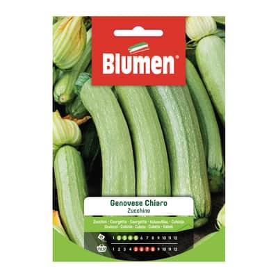 Seme per orto zucchino genovese chiaro