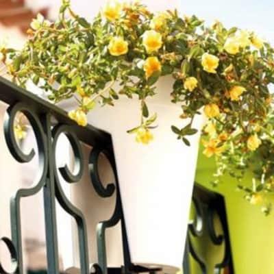 Vaso Capri Varanda ARTEVASI in polipropilene colore bianco H 30 cm, Ø 30 cm